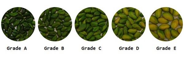 Green Kernels Grades