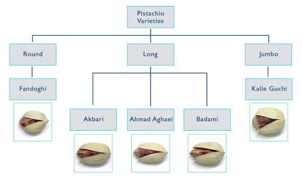 Iranian Pistachios Types