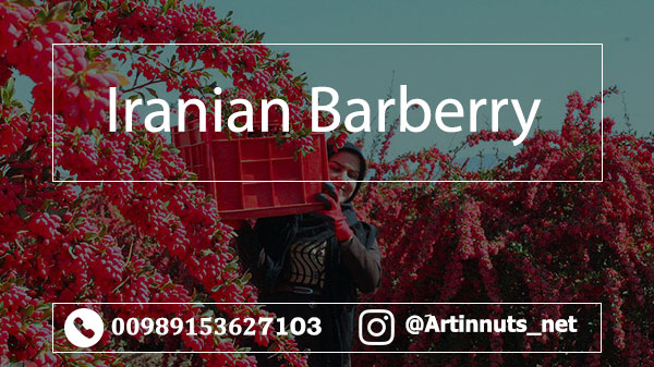 Barberry Exports to Germany