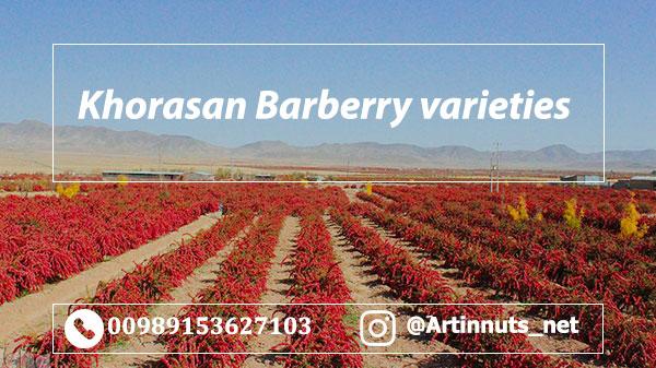 Khorasan Barberry Varieties