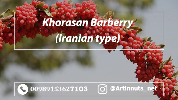 Iranian Khorasani Barberry