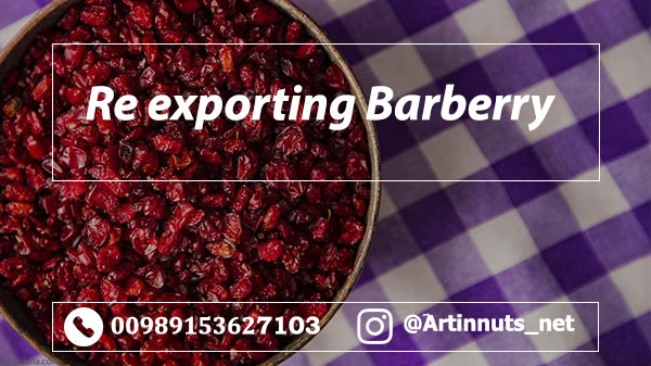 Iranian Barberry Exporter