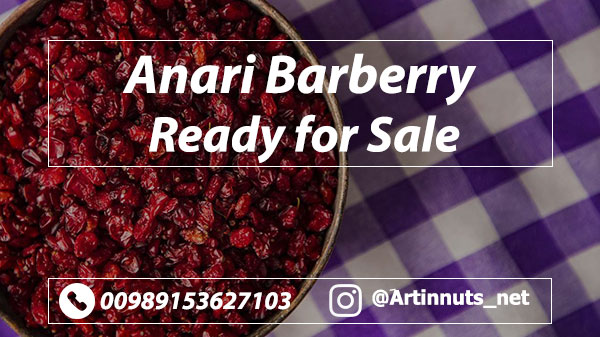 Anari Barberry Sale