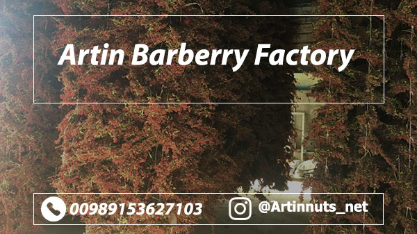Artin Barberry Factory