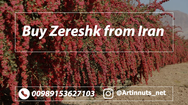 Buy Barberry Zereshk