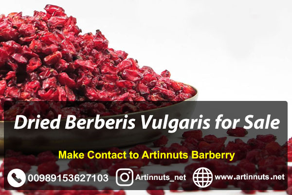 Dried Berberis Vulgaris