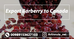 Export Barberry to Canada