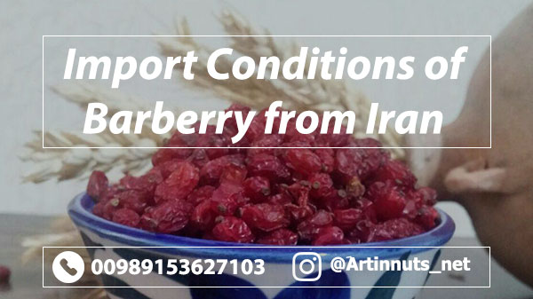 Barberry Import