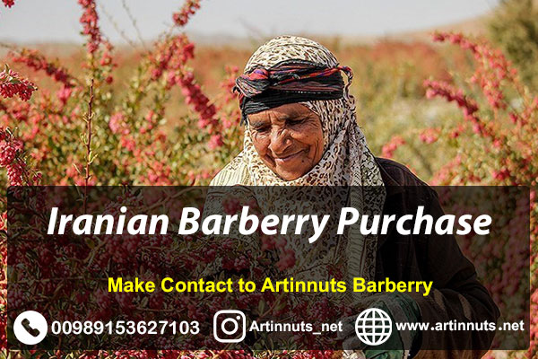 Iranian Barberry Purchase