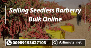 Selling Seedless Barberry