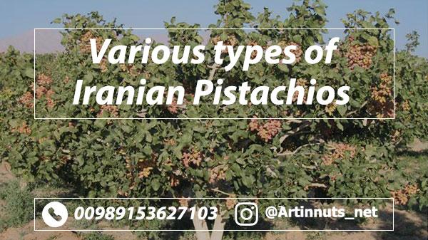 Iranian Pistachios Varieties