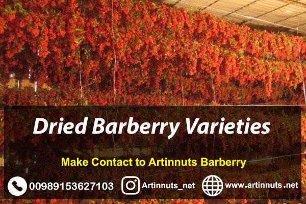 Dried Barberry Varieties