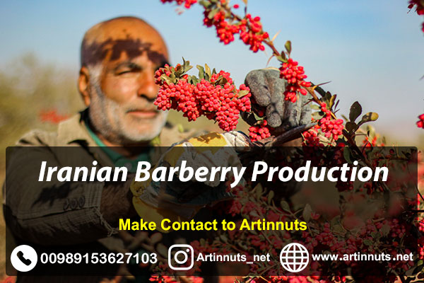 Iranian Barberry Production