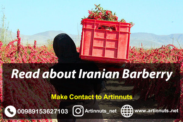 Iranian Barberry