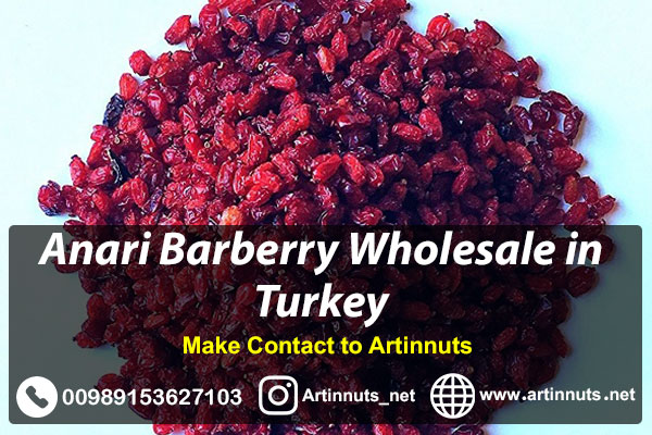 Anari Barberry Wholesale