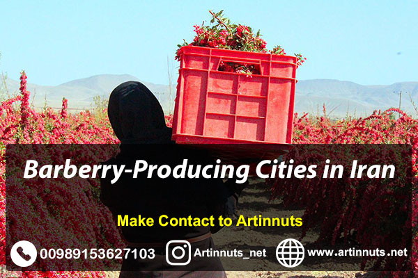 Barberry Producing Cities