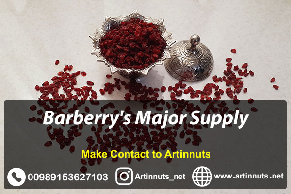 Barberry Major Supply