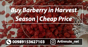 Buy Barberry in Harvest season