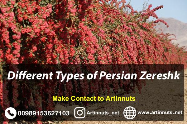 Persian Zereshk