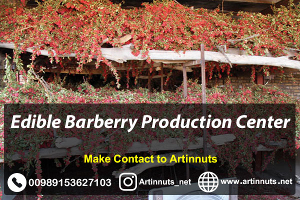 Edible Barberry Production