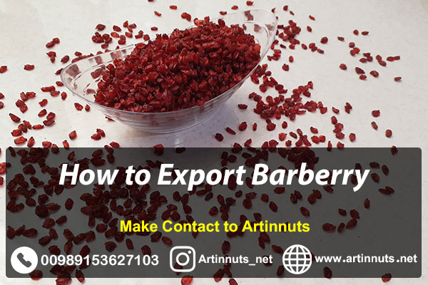 Export Barberry