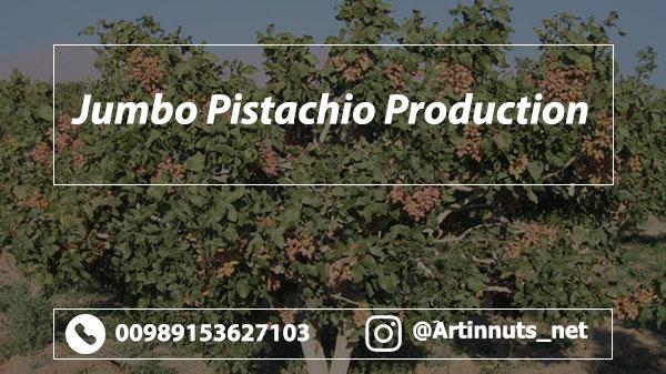 Jumbo Pistachio Production