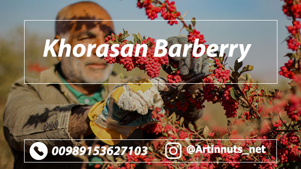 Khorasan Barberry