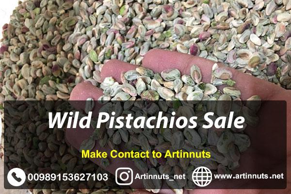 Wild Pistachios Sale