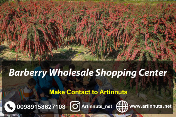 Barberry Wholesale Shopping