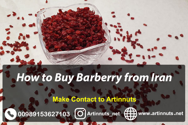 Buy Iranian Barberry