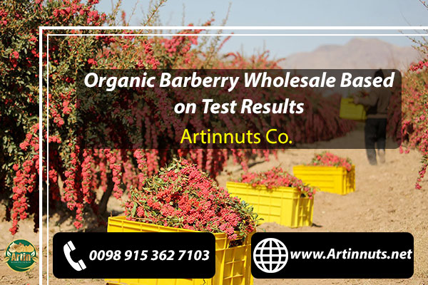 Organic Barberry Wholesale