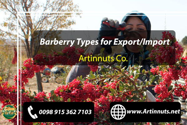 Barberry Types