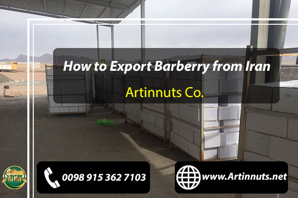 Export Barberry