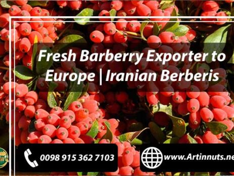 Fresh Barberry Exporter