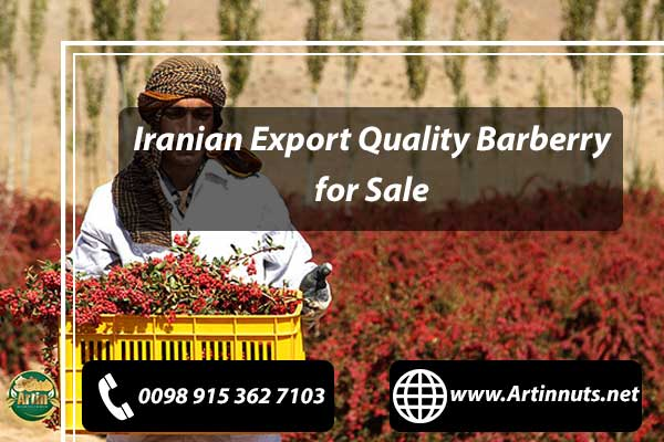 Barberry for Sale