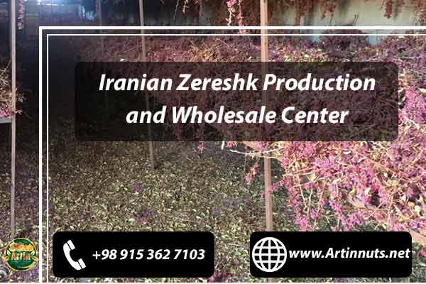 Iranian Zereshk Production
