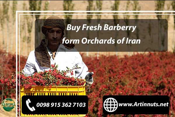 Buy Fresh Barberry