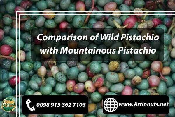 Mountainous Pistachio