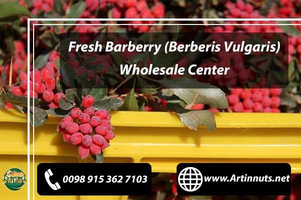 Berberis Vulgaris Wholesale