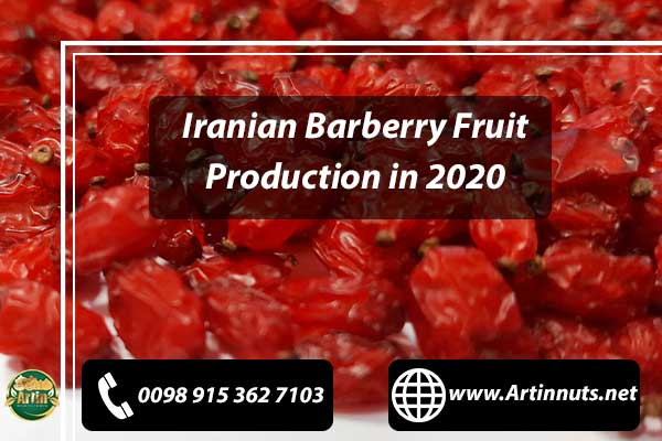 Barberry Fruit Production