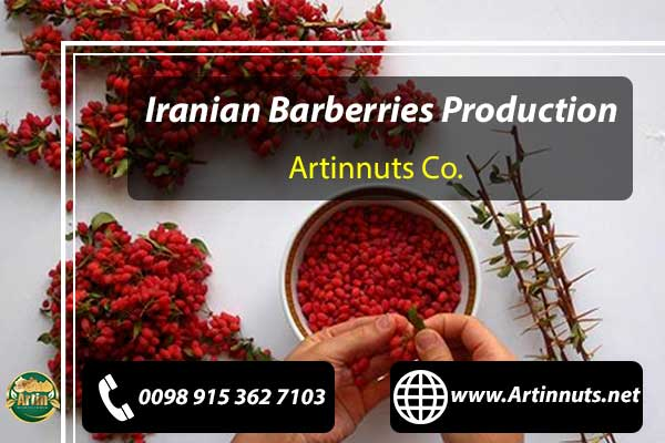 Dried Barberries Production