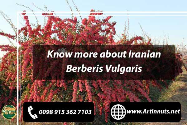 Iranian Berberis Vulgaris