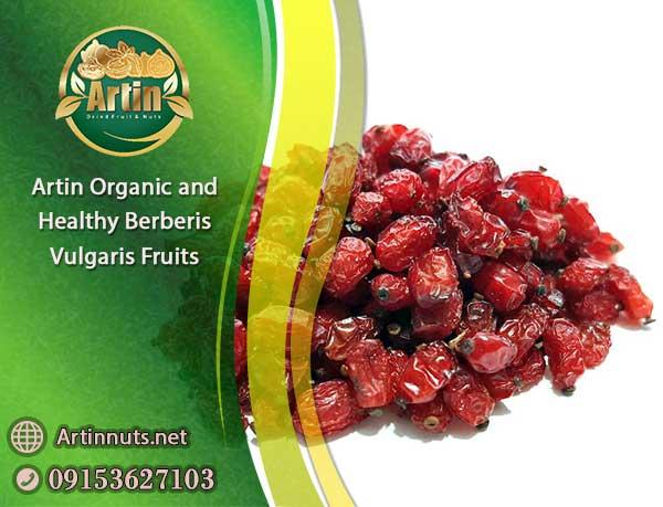 Artin Berberis Vulgaris Fruits