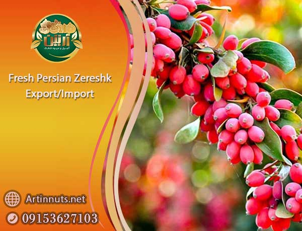 Fresh Persian Zereshk