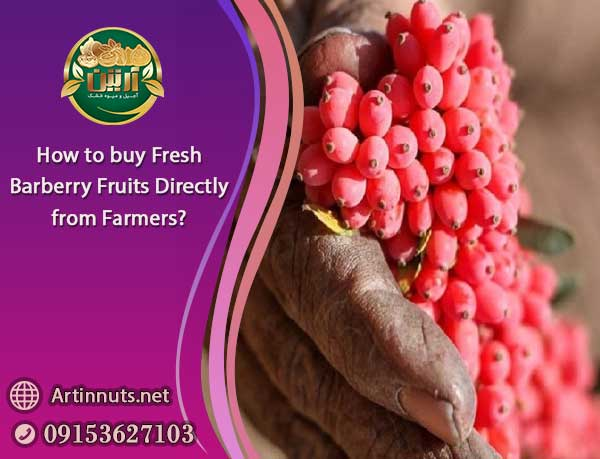Fresh Barberry Fruits