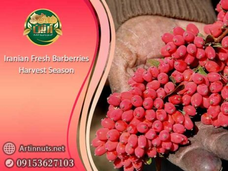 Iranian Fresh Barberries