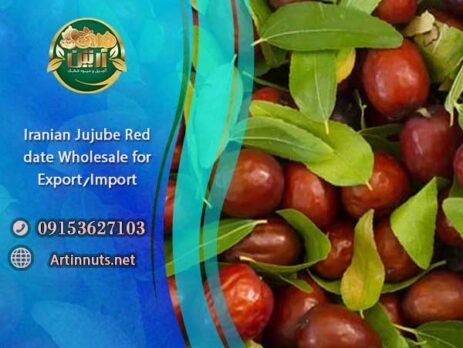 Jujube Red date Wholesale