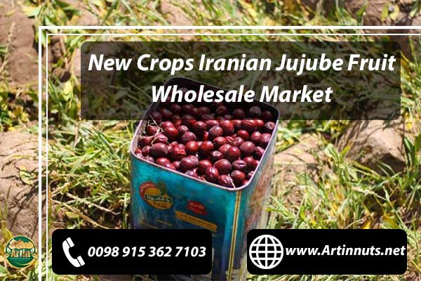 New Crops Jujube Fruit