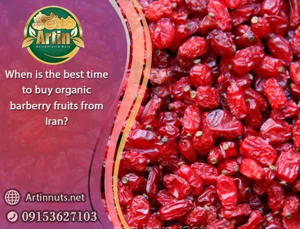 buy organic barberry