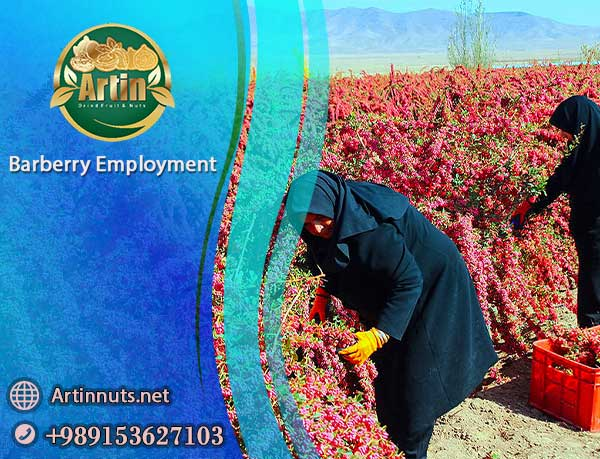 Barberry Employment